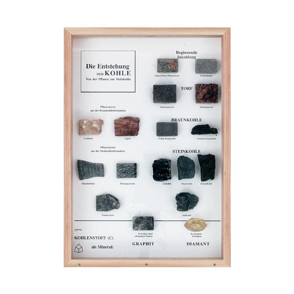 Schaukasten: Die Entstehung der Kohle
