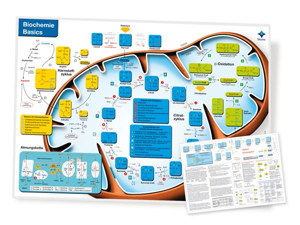 Biochemie Basics II Poster