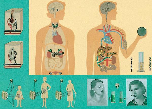 LT: Hormone - Wirkstoffe des Körpers