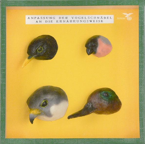 Schaukasten: Typische Vogelschnäbel