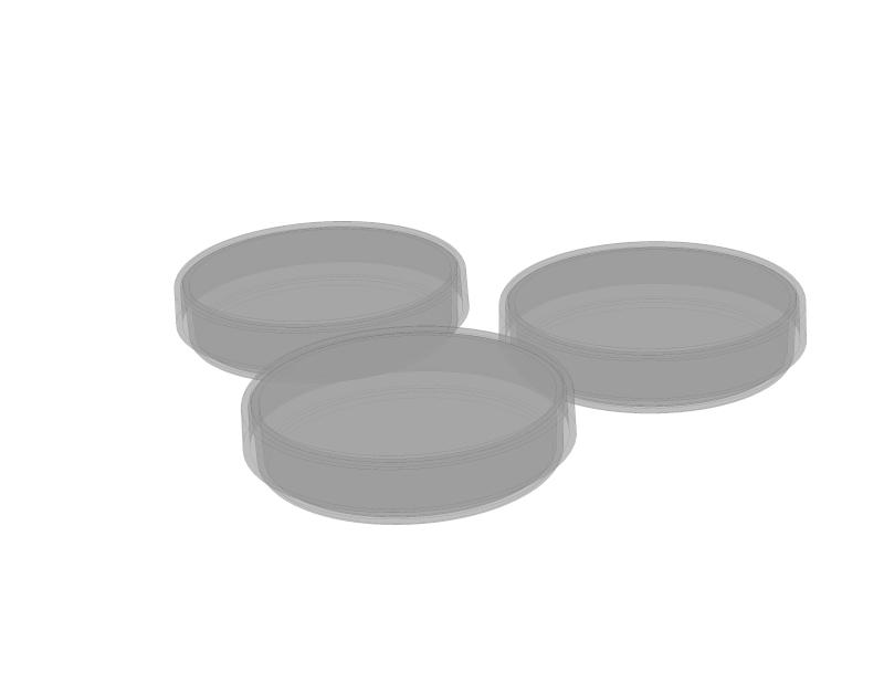 Simulation einer Infektionskette mit Bäckerhefe