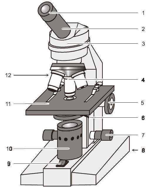 Aufbau und Funktionsweise eines Lichtmikroskops