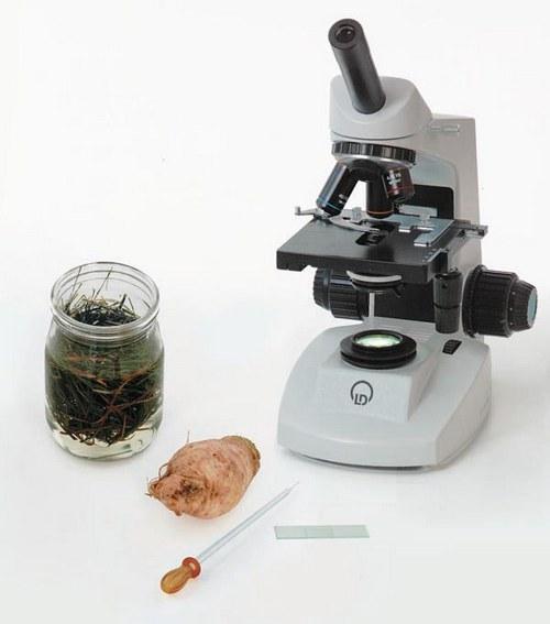 Betrachtungen mit dem Mikroskop