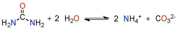 Enzymatik: Harnstoffspaltung durch Urease